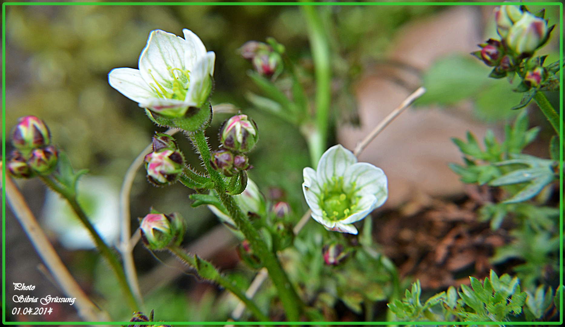 zarte kleine Blüten