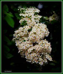 zarter Blumengruß ....