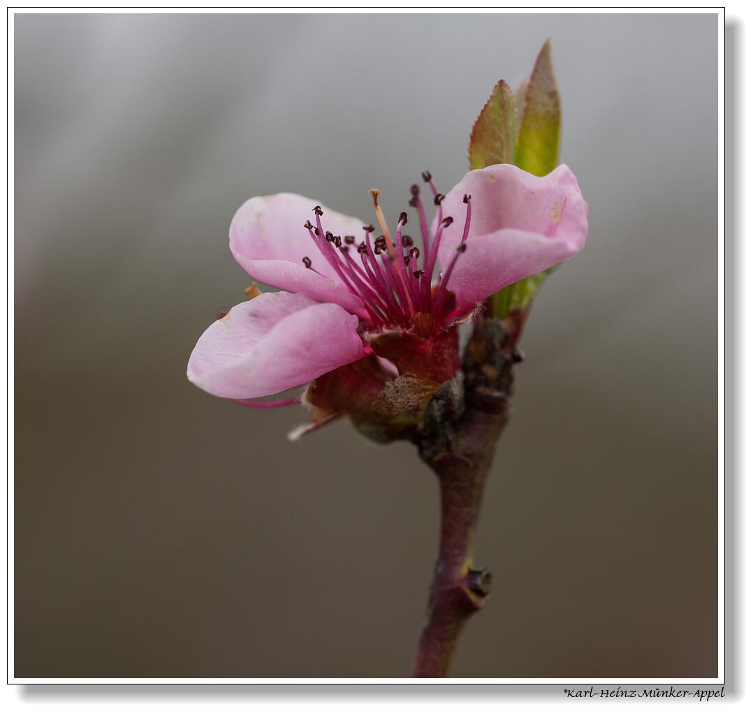 zarter Frühling