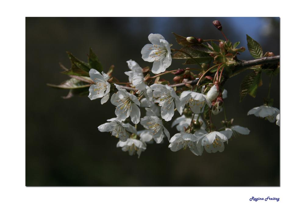 Zarter Frühlingsbote