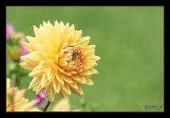 zartes gelb