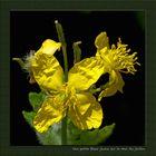 Zartes gelbes Blümchen auf der Gartenmauer