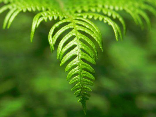 zartes Grün im Frühling