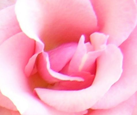zartrosa Blütenbett