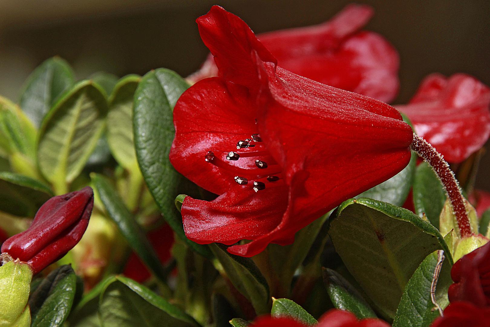 Zauber einer Blüte