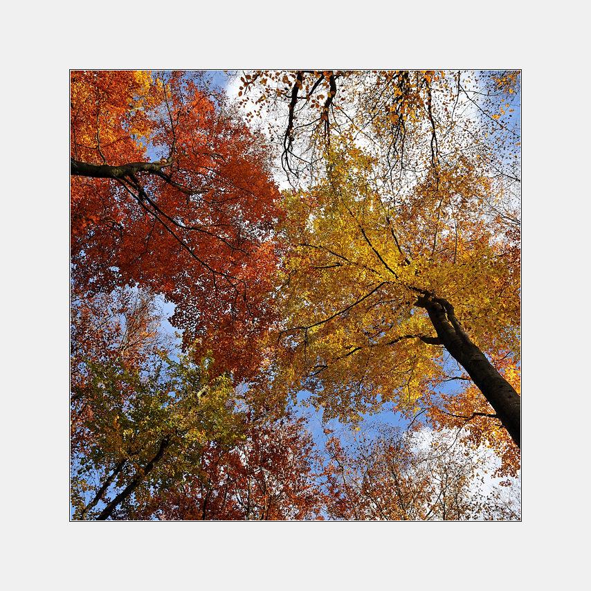 *Zauber eines sonnigen Herbsttages*