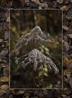 Zauber im Herbstwald