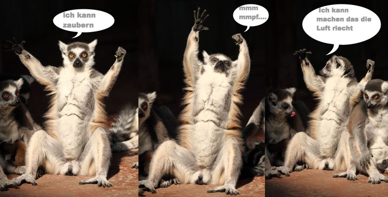 Zauber Katta