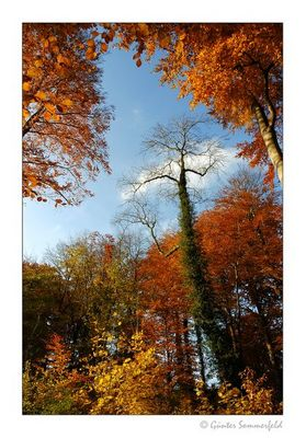 Zauber-Wald-Magie