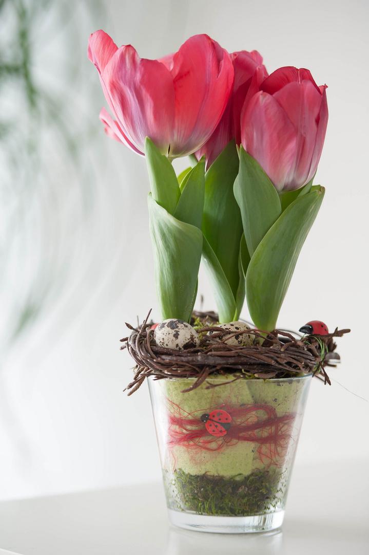 zauberhaft tulpich #24
