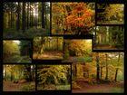 Zauberhafte Herbstfarben