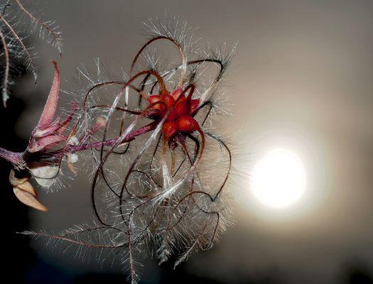 Zauberhafte Herbstimpressionen! - Le soleil se lève à l'horizon!