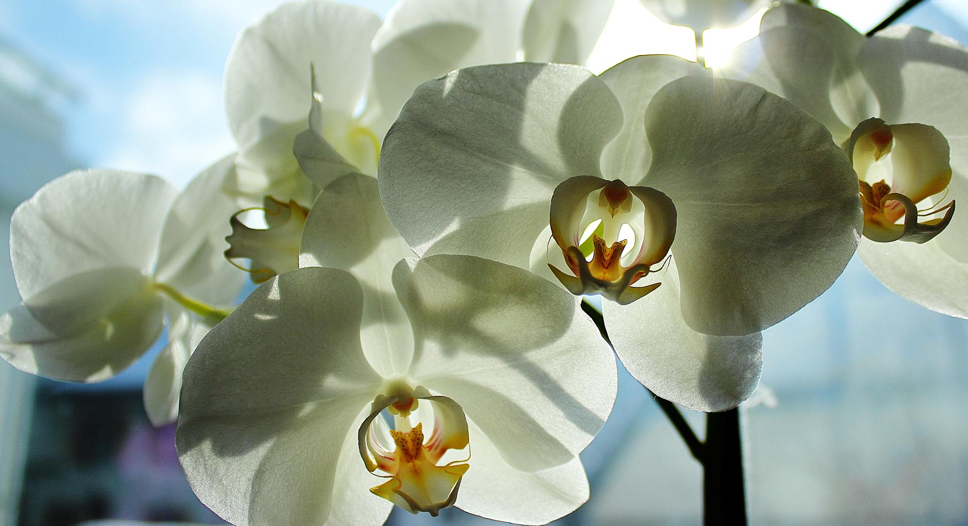 Zauberhafte Orchidee