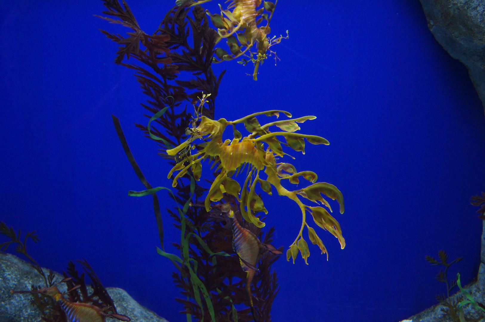 Zauberhafte Unterwasserwelt