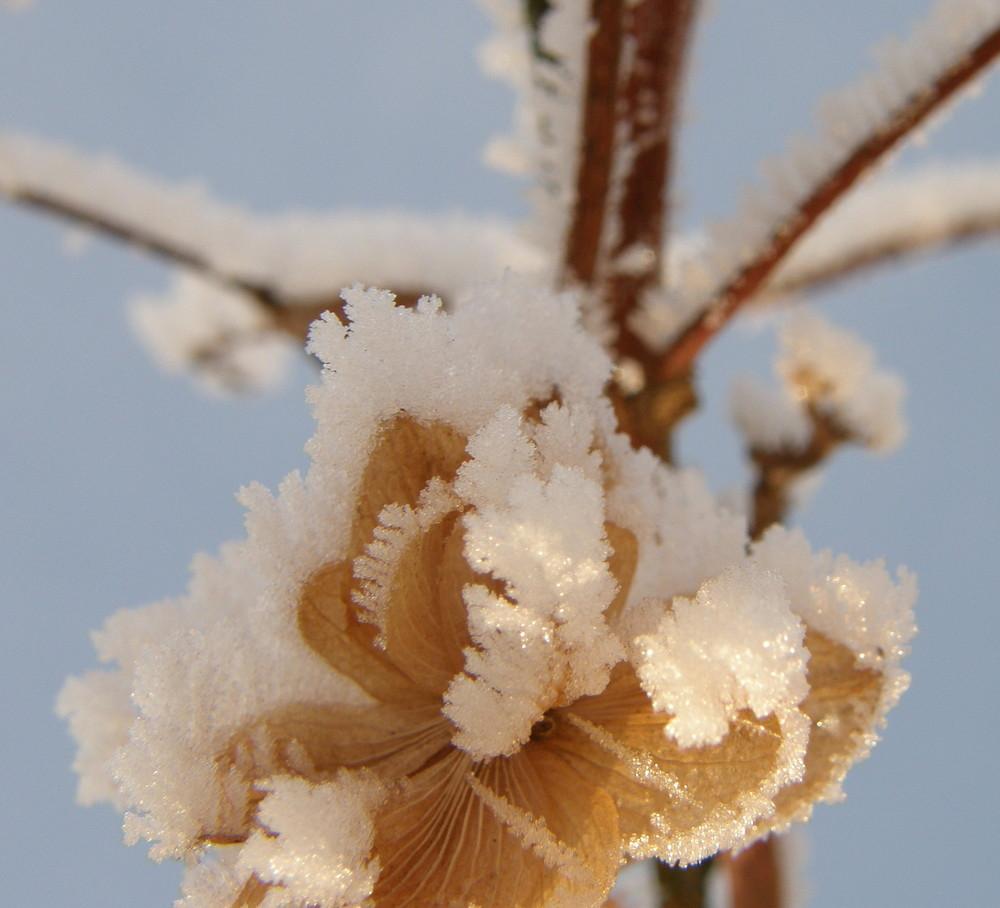 Zauberhafte Winterblumen