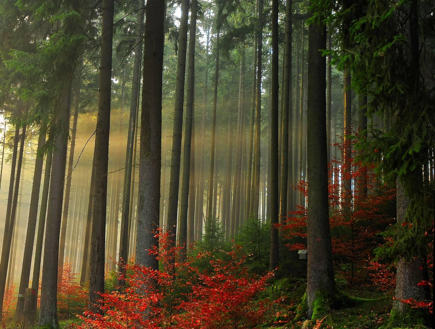 Zauberhafter Wald