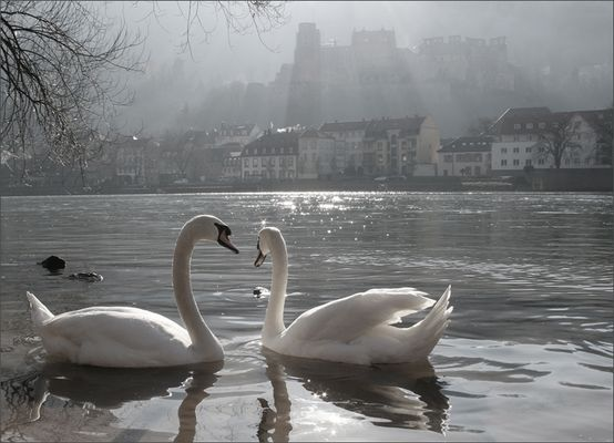 Zauberhaftes Heidelberg