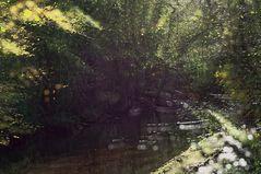 Zauberwald-Bach im Herbst  ....