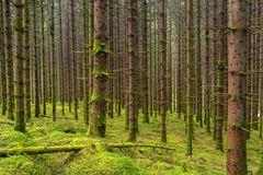 Zauberwald © Matthias Buehner