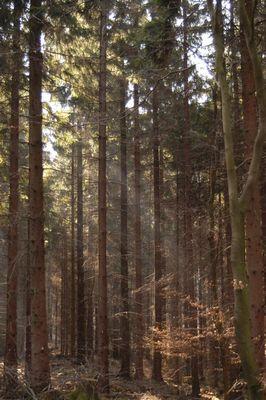 Zauberwald mit kleinen Schäden.....