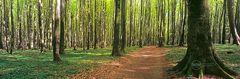 Zauberwald Panorama