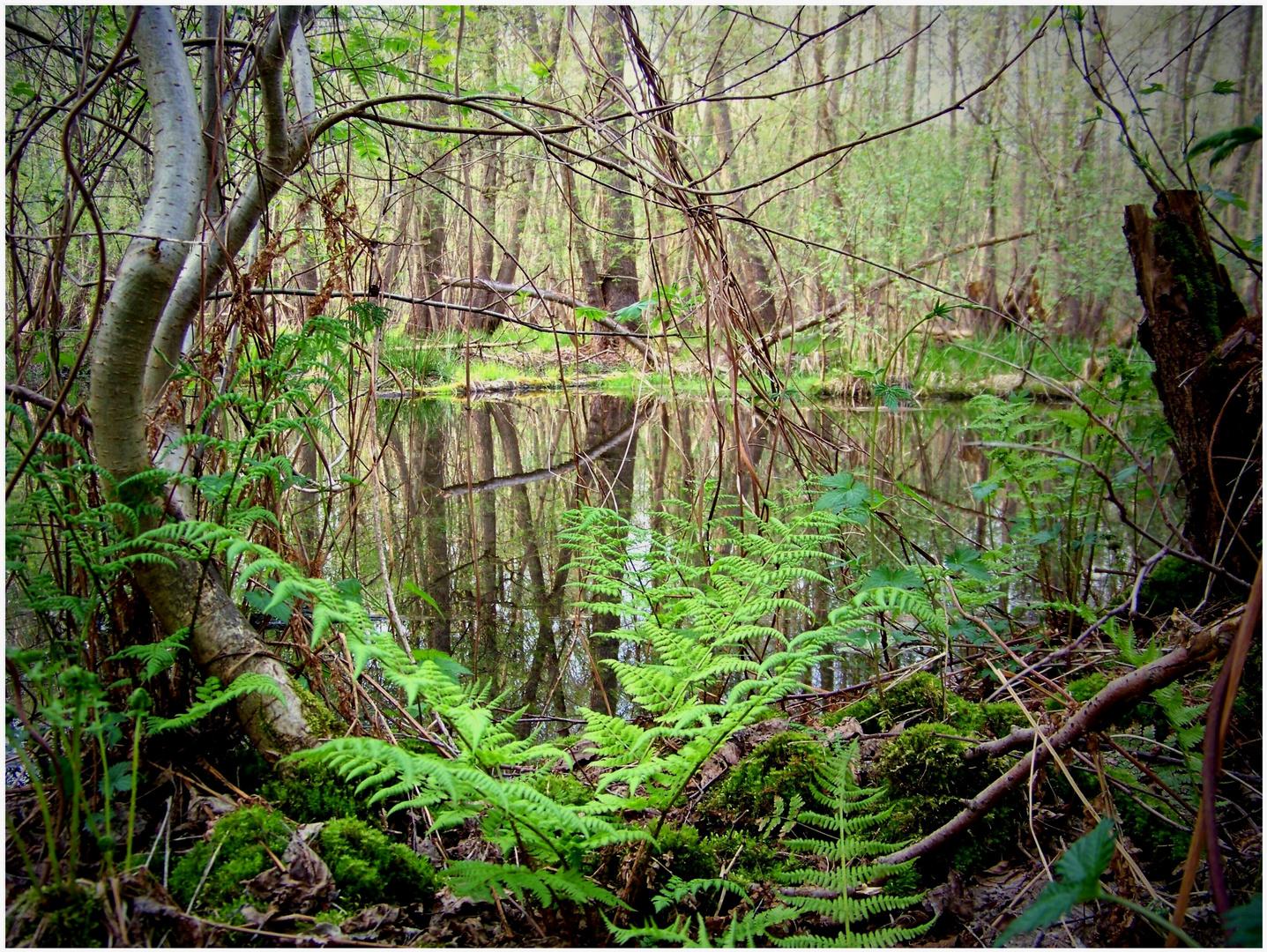 Zauberwasser-Wald