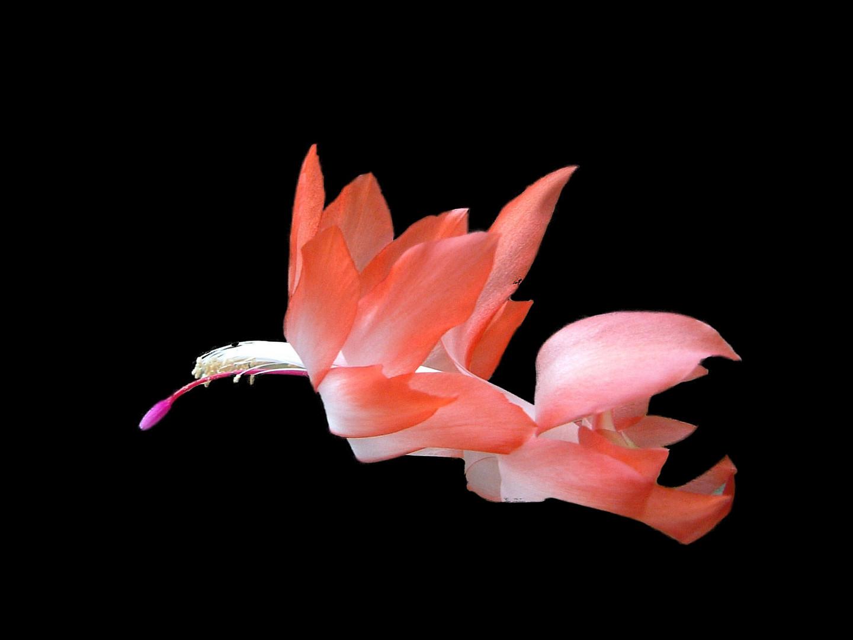 Zauberwelt der Blüten
