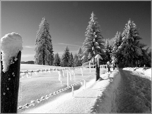 Zaun Bäume Schnee