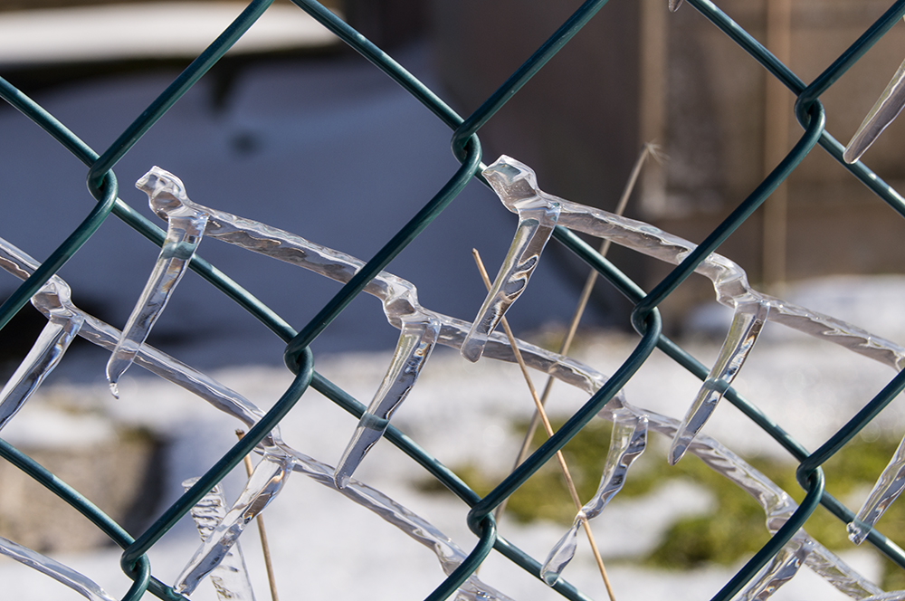 Zaun des Schneekönigs