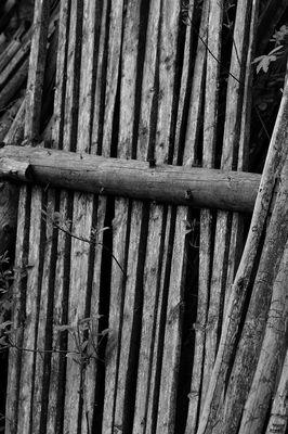 Zaun im Wald