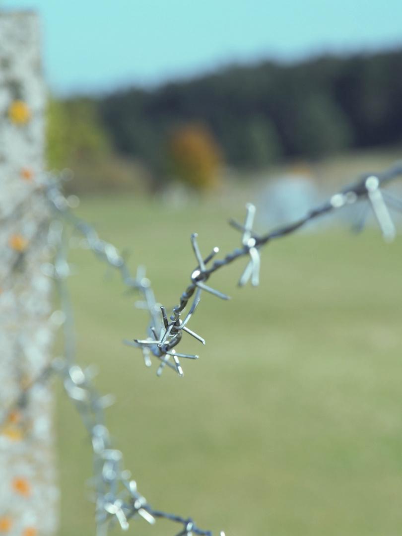 Zaun in die Freiheit