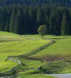 Zaun mit Baum