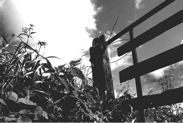 Zaun-Pflanzen-Himmel-Gemälde