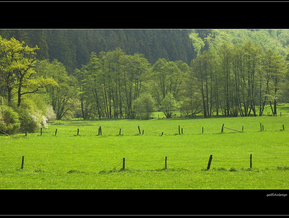 Zaun und Baum !
