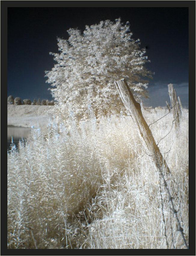 Zaun und Baum