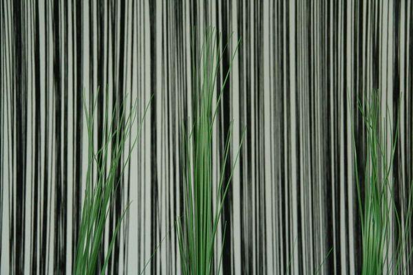 Zebra-Gras