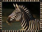 Zebra im Fell-Rahmen
