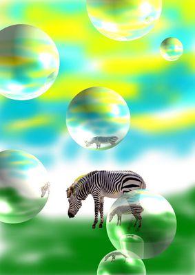 Zebra Phantasien