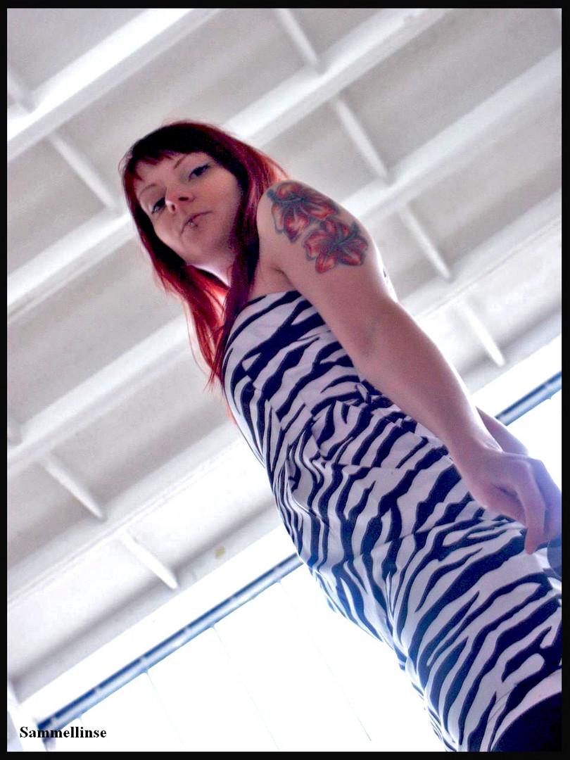 Zebra-Sany1