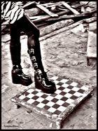 Zebra-Sany3