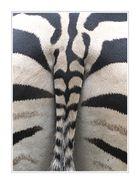 Zebraa...