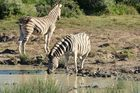 Zebras an der Wasserstelle
