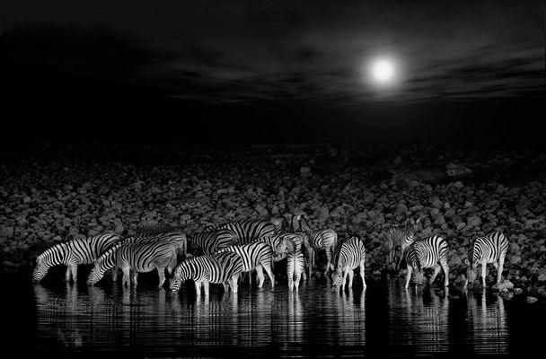 Zebras' Party