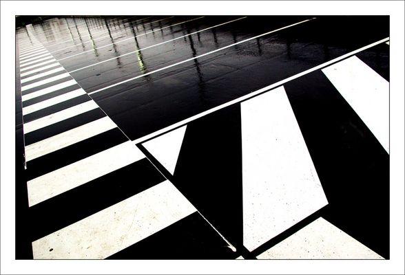 Zebre urbain : under the rain