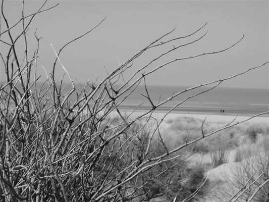 Zeebrugge dunes