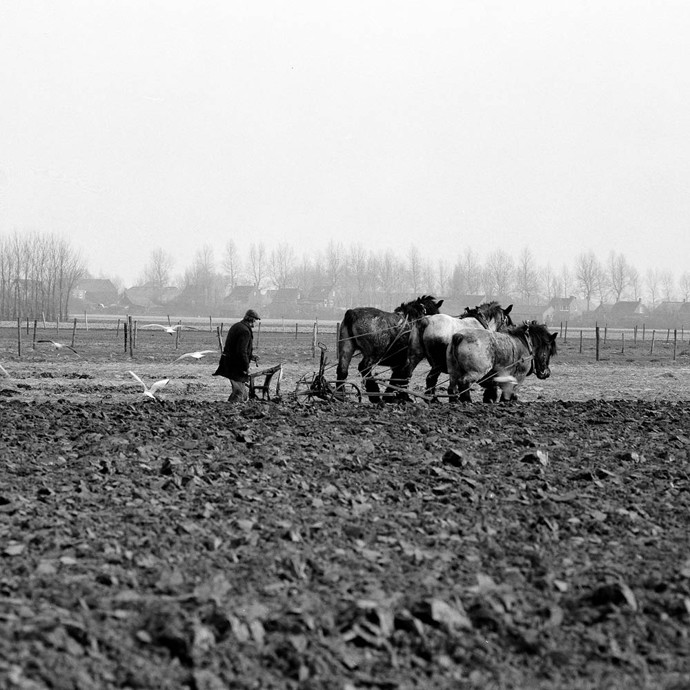 Zeeland 1981