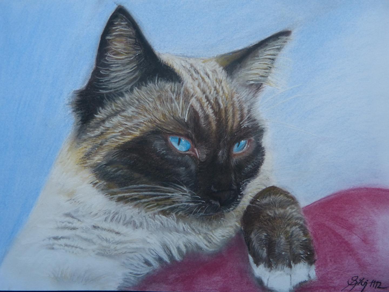 Zeichnung einer Birma-Katze