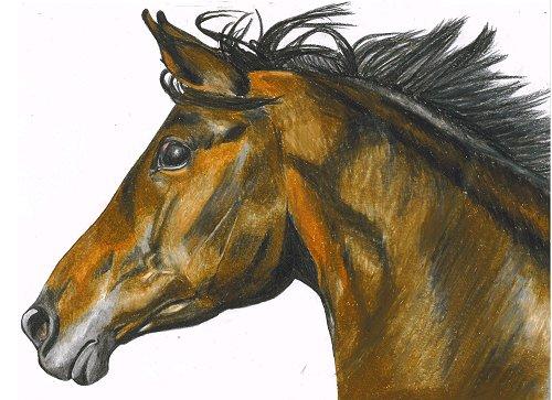 Zeichnung - Kopf