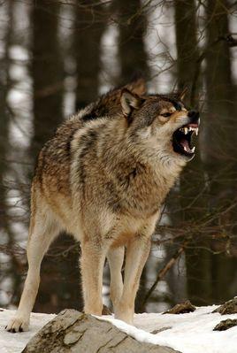 Zeig her deine Zähne,.....