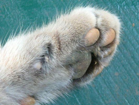 Zeigt her eure Füße....